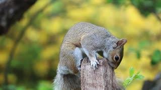 Squirrel On A Wood